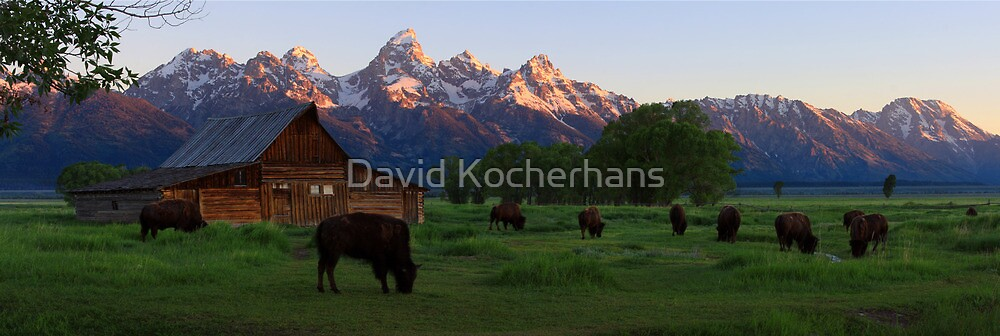 Barn and Bison Panorama by David Kocherhans