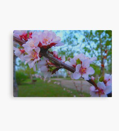 Flowering Shrub Canvas Print