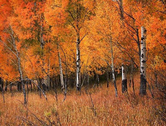 Fire Grove by David Kocherhans