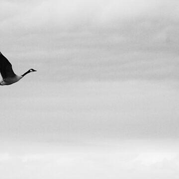 Flying bird by johandahlberg
