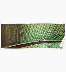 leaf lashes Poster