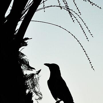 Bird Silhouette by johandahlberg