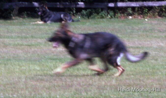RUN......FORREST.....RUN by Heidi Mooney-Hill