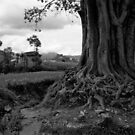 Pipal Tree. Khopasi, Nepal by John Callaway
