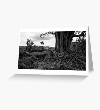 Pipal Tree. Khopasi, Nepal Greeting Card