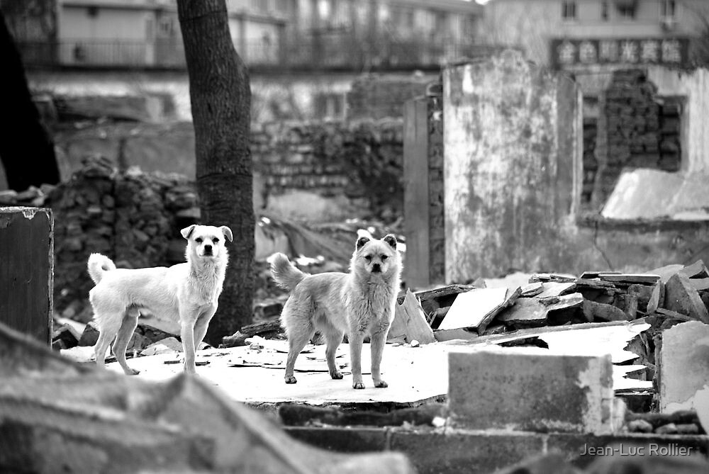 Beijing - Hutong's dogs. by Jean-Luc Rollier