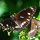 Butterfly on Display by Richie Wessen