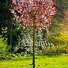 Colourful Tree by Richie Wessen