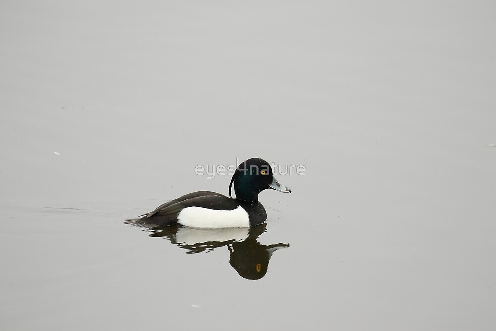 Tufted reflection by eyes4nature