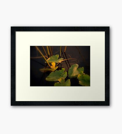 Mystery in light Framed Print
