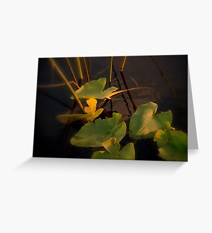 Mystery in light Greeting Card