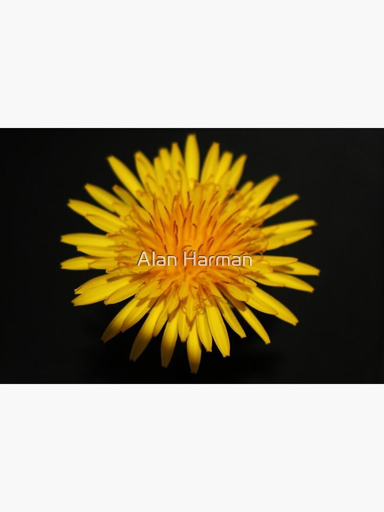 Dandelion Flower by AlanHarman