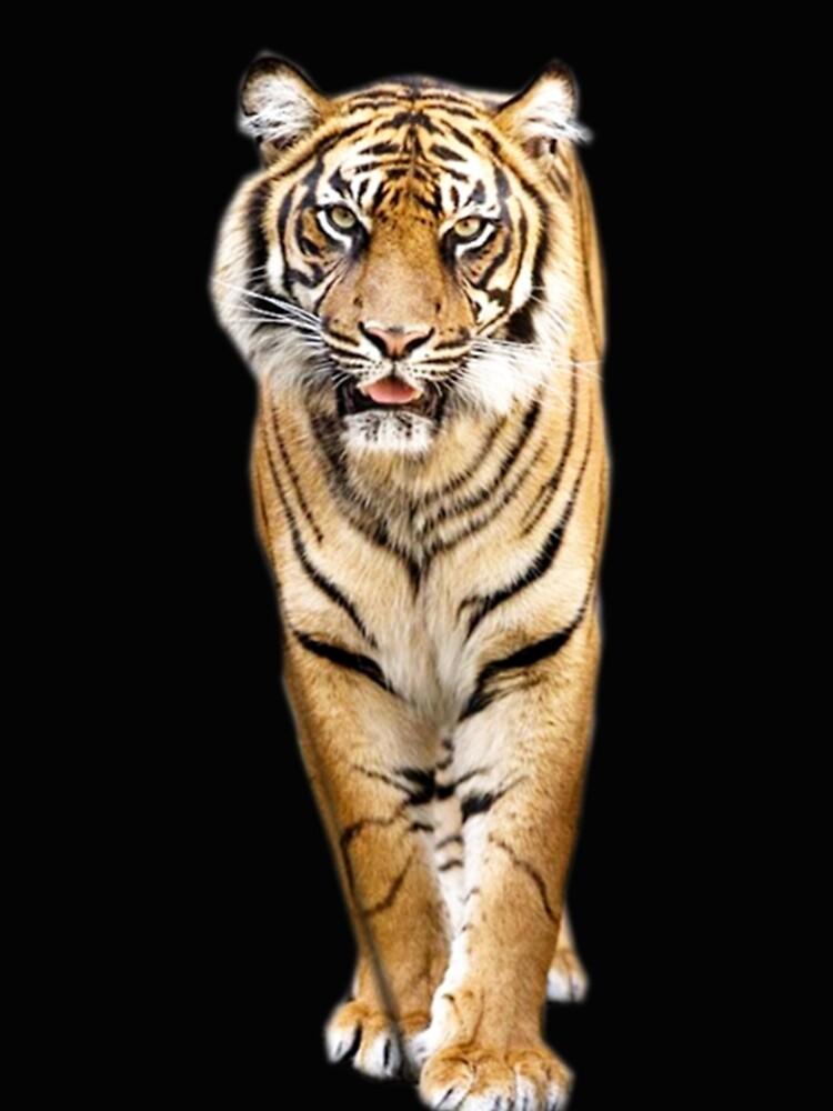 Tiger by Vitalia