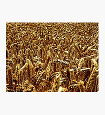 Harvest - Grantham Photographic Print