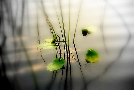 ZEN perfect by Susanne Van Hulst