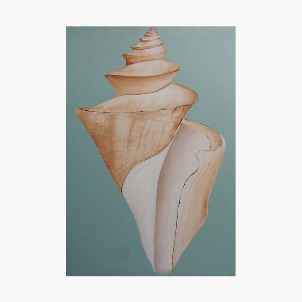 Japanese Wonder Shell Photographic Print