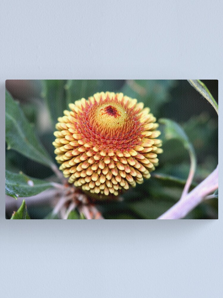 Alternate view of Banksia epica Canvas Print