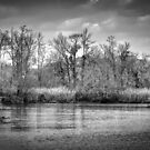 Zulaufwasserstraße von TJ Baccari Photography