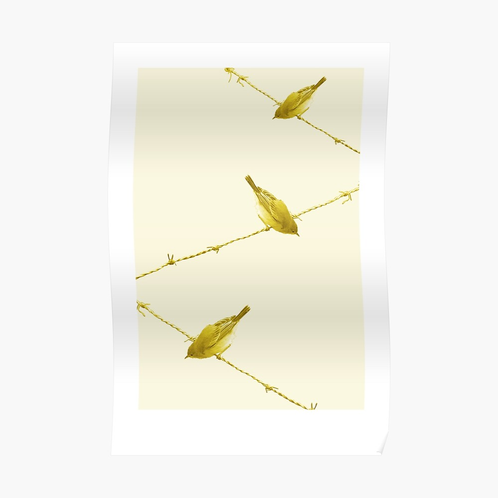 Monochrome - Yellow warblers on the wire Poster