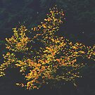 Yellow Leaves Against Bland by AlGrover