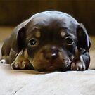 Puppy Love by vigor