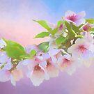 Charmante Kirschblüten von Anita Pollak