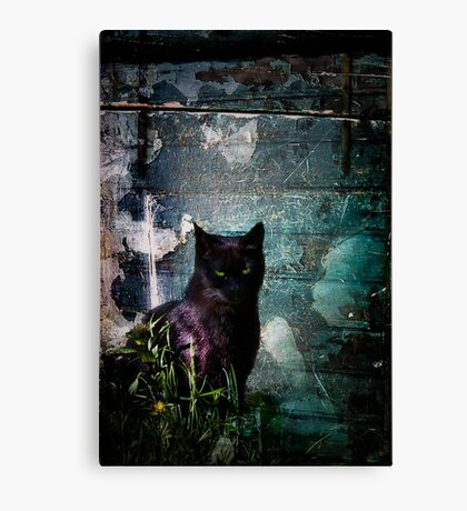 Truth Or Stare? Canvas Print