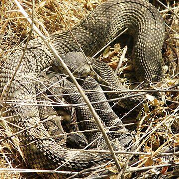 Rattlesnake love by fnature