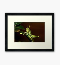 The orthopteron Framed Print