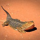 Bearded Dragon. by trevorb