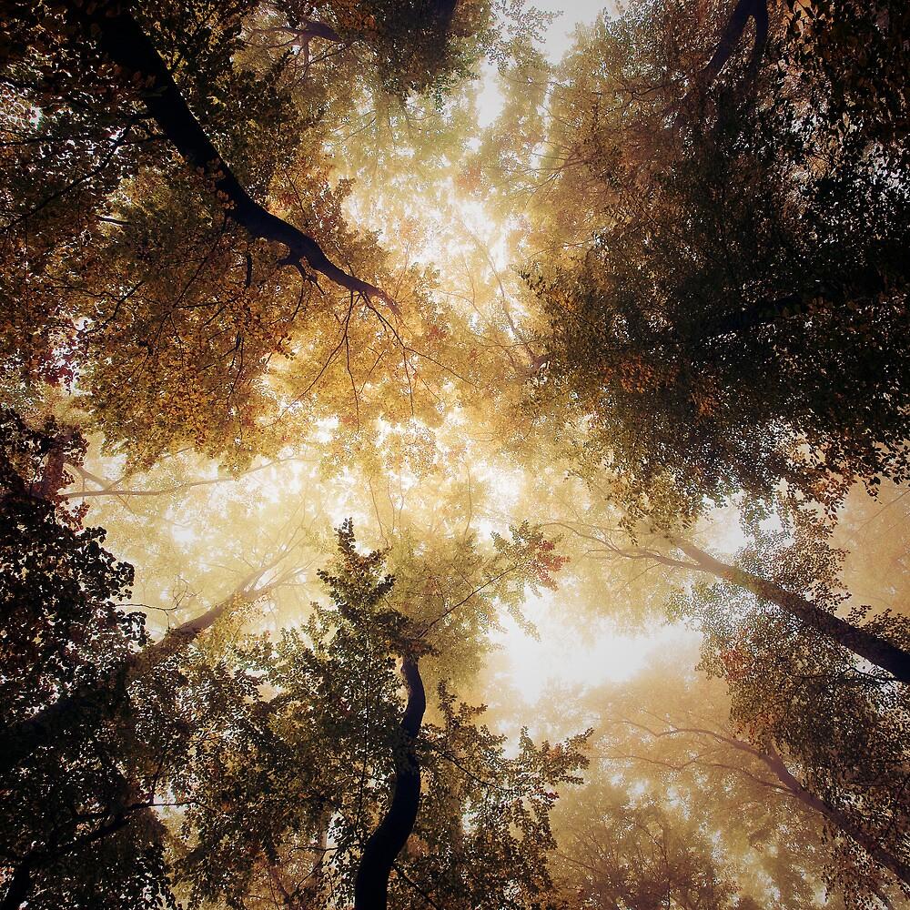Vertigo by Alain Baumgarten