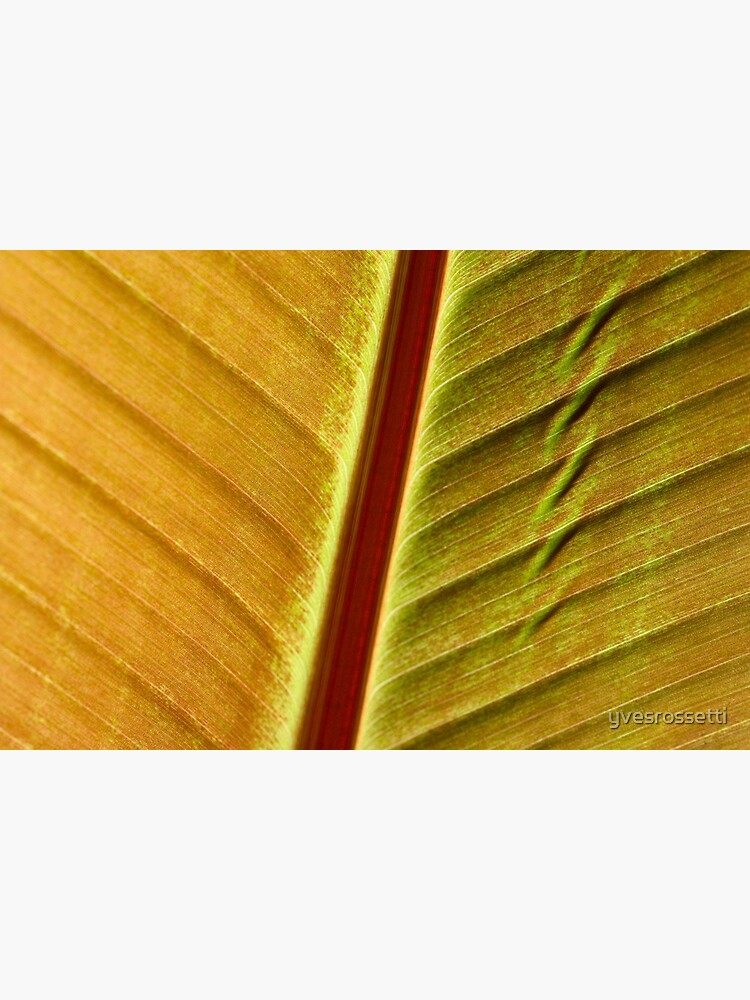 bronze leaf by yvesrossetti