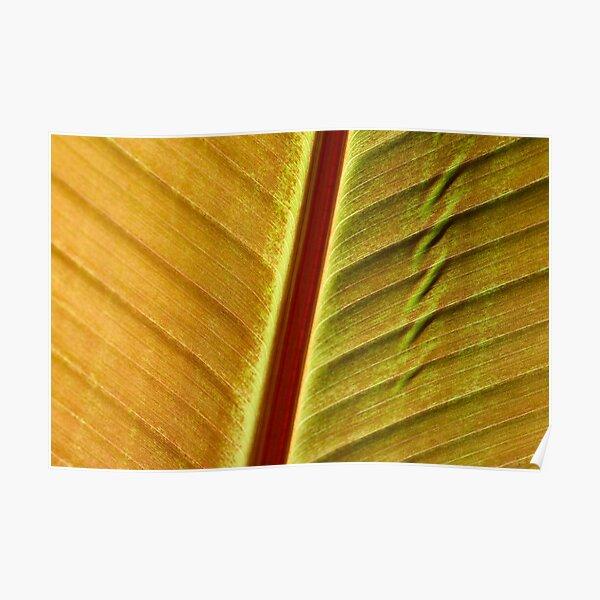 bronze leaf Poster