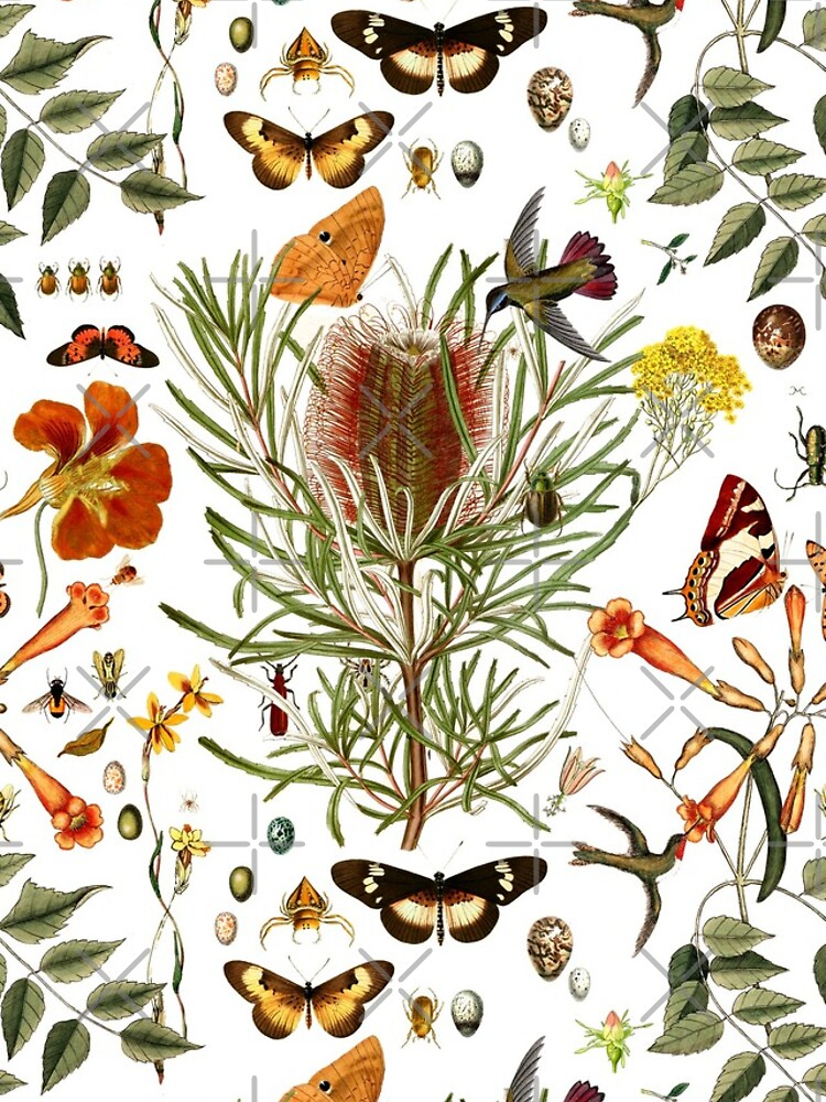 Banksia,Butterflies and bees by rolphenstien