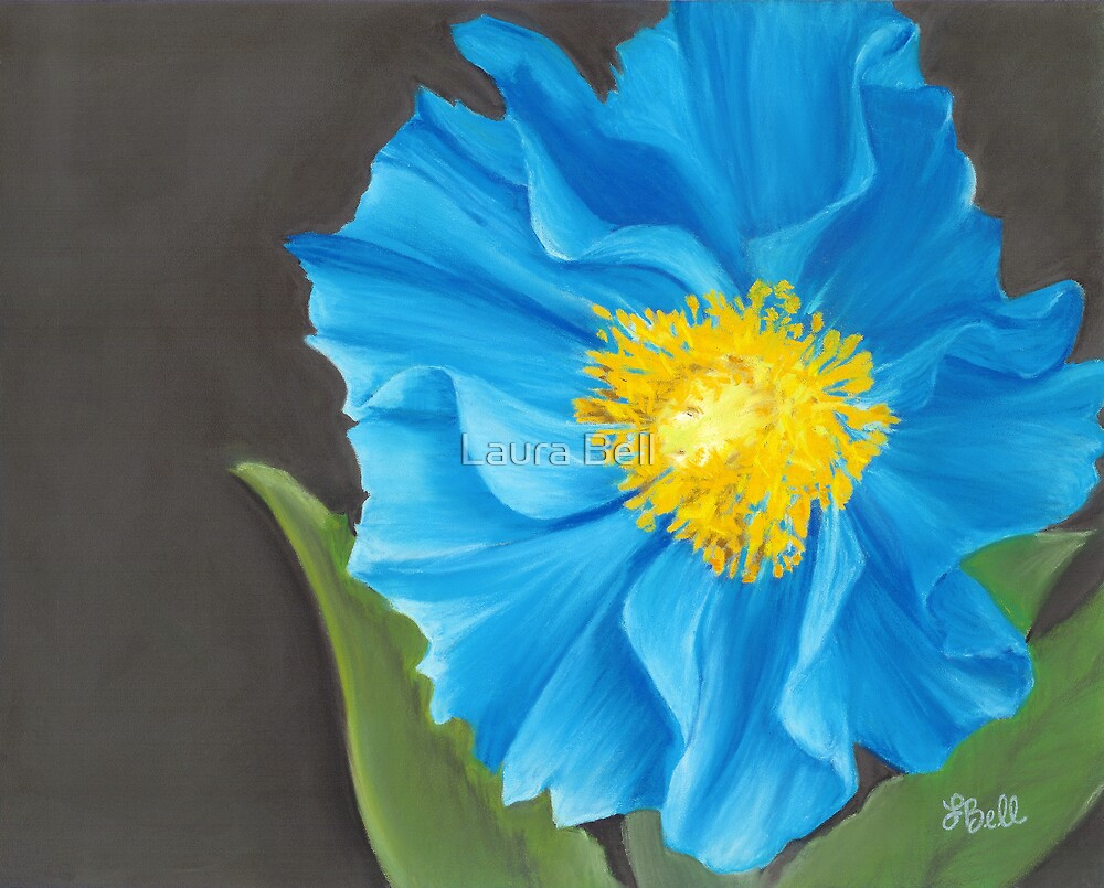 """""""Asian Blue,"""" 10"""" x 8"""" Soft Pastel on Pastelbord. Himalayan Blue Poppy with Bright Orange & Yellow Center by Laura Bell"""