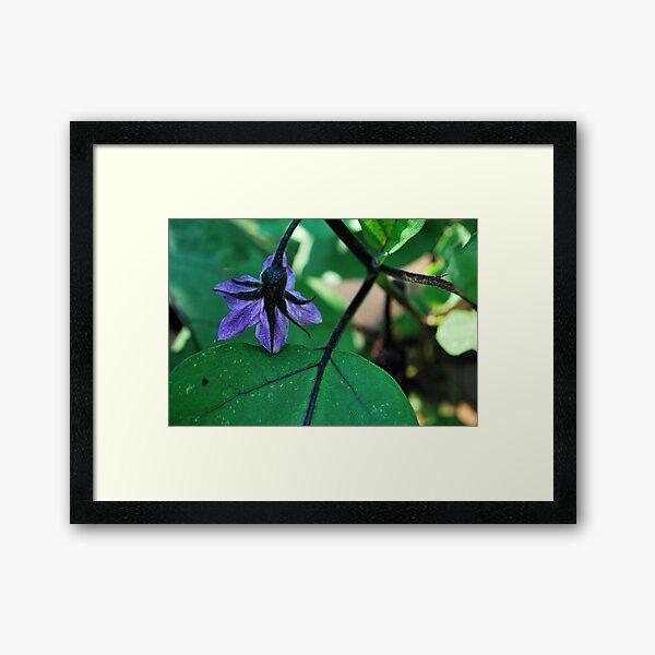 essence of eggplant!  Framed Art Print