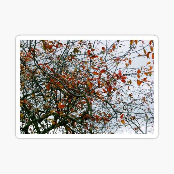 Tree Abstract 3 Sticker