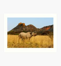 BLACK RHINO - SOUTH AFRICA Art Print