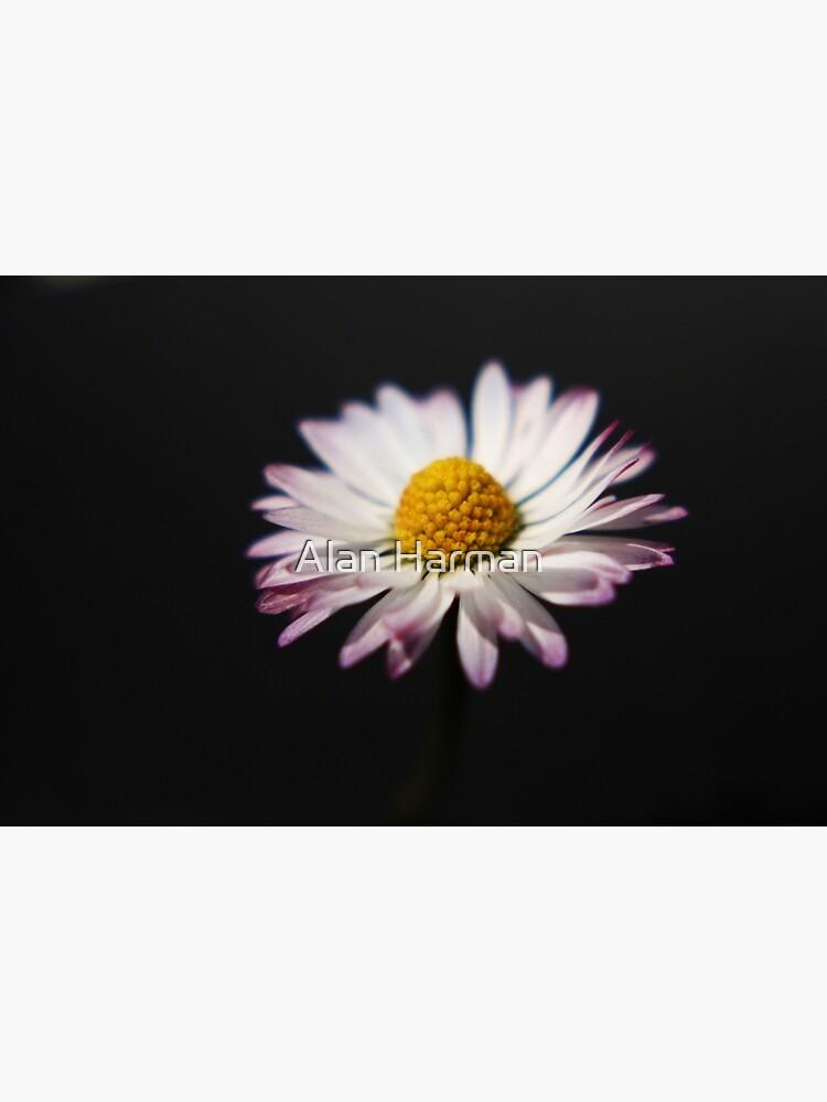 Common Daisy by AlanHarman