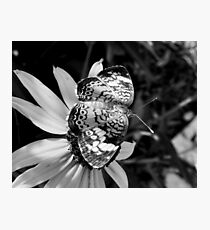 Black & White Pearl Photographic Print