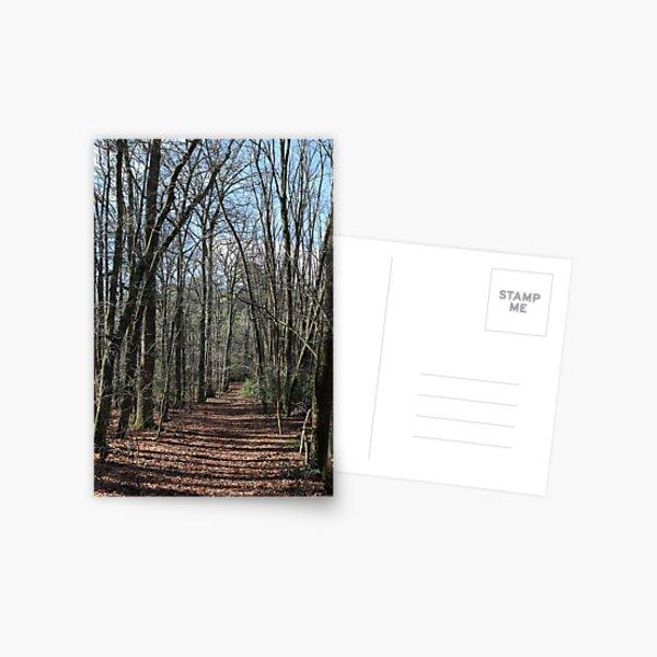 Walking Track at Emerald Lake Postcard