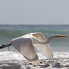 White in Flight One (cu) by Tom Deters