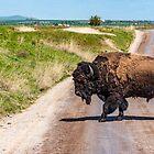 Warum hat der Bison die Straße überquert? von Bryan D. Spellman