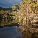 Aussie Bush Reflected by Kylie  Sheahen