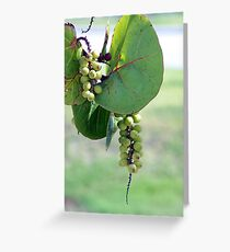 Shore plant Greeting Card