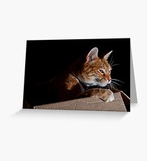 Cat In a Box Greeting Card