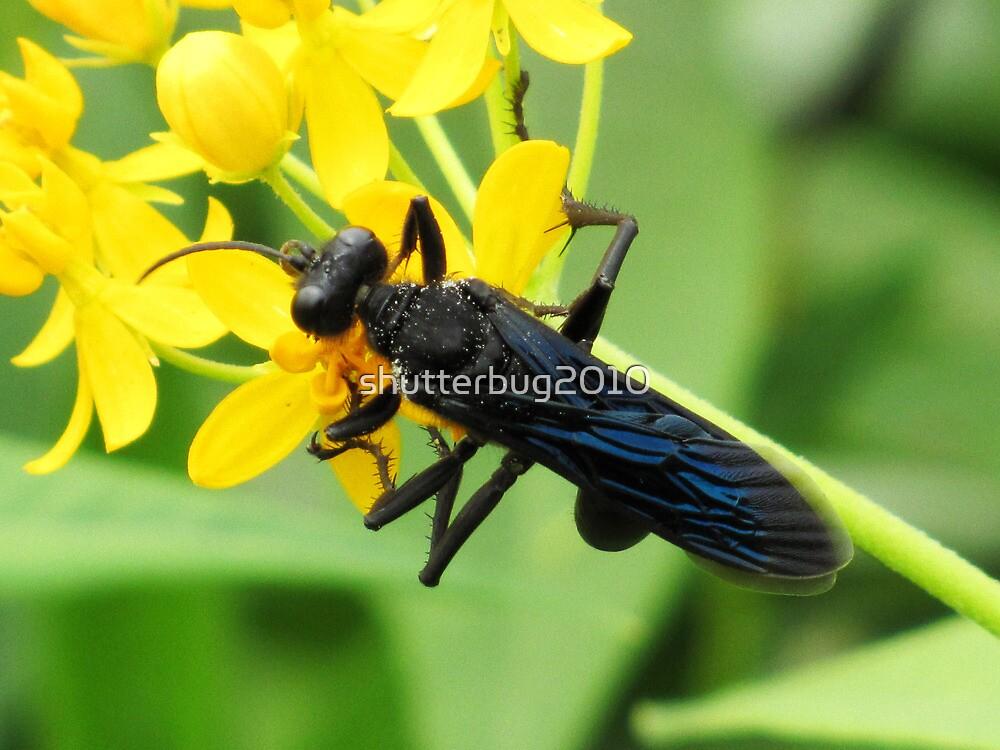 Black Wasp by shutterbug2010