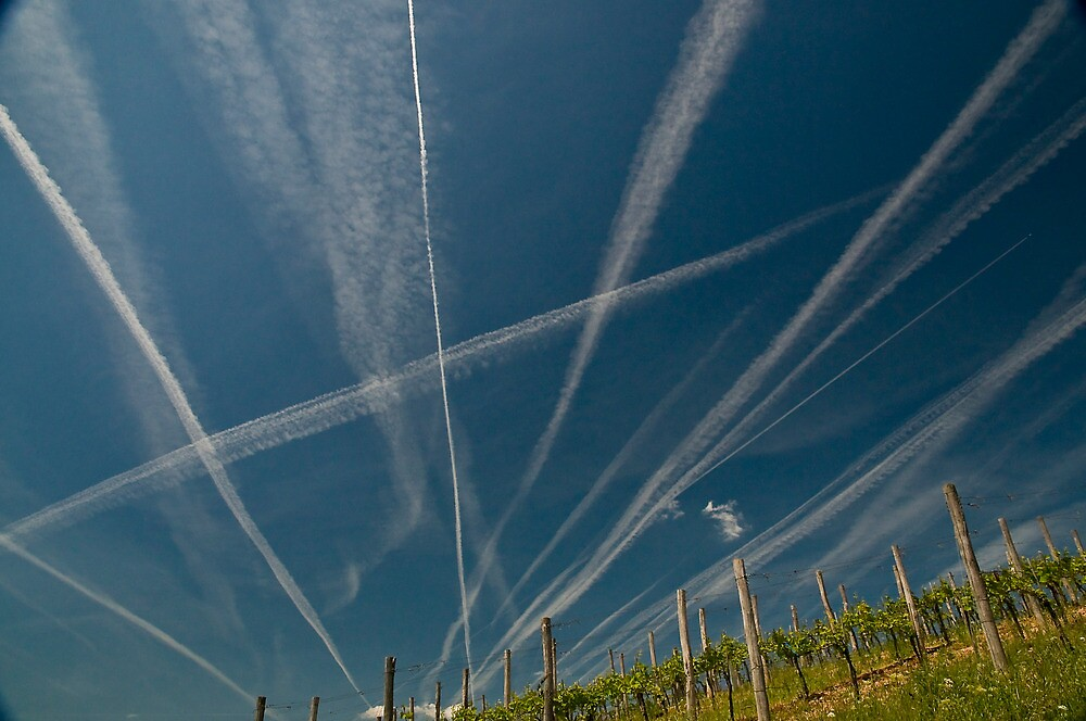 Vapour Trails in vineyard by Quasebart