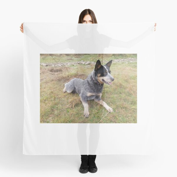 Lancashire Heeler scarf with dogs on dog print scarves for women