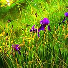 Moody Purple Iris by Dorothy Berry-Lound